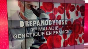 Journée  mondiale de la Drépanocytose