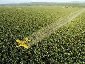 Chlordécone et pesticides : les résultats de l'étude ChlEauTerre