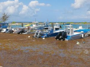 Bateaux sont mis hors service car les algues peuvent endommager leur fonctionnement