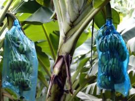 Information destinée aux travailleurs et anciens  travailleurs des exploitations bananières